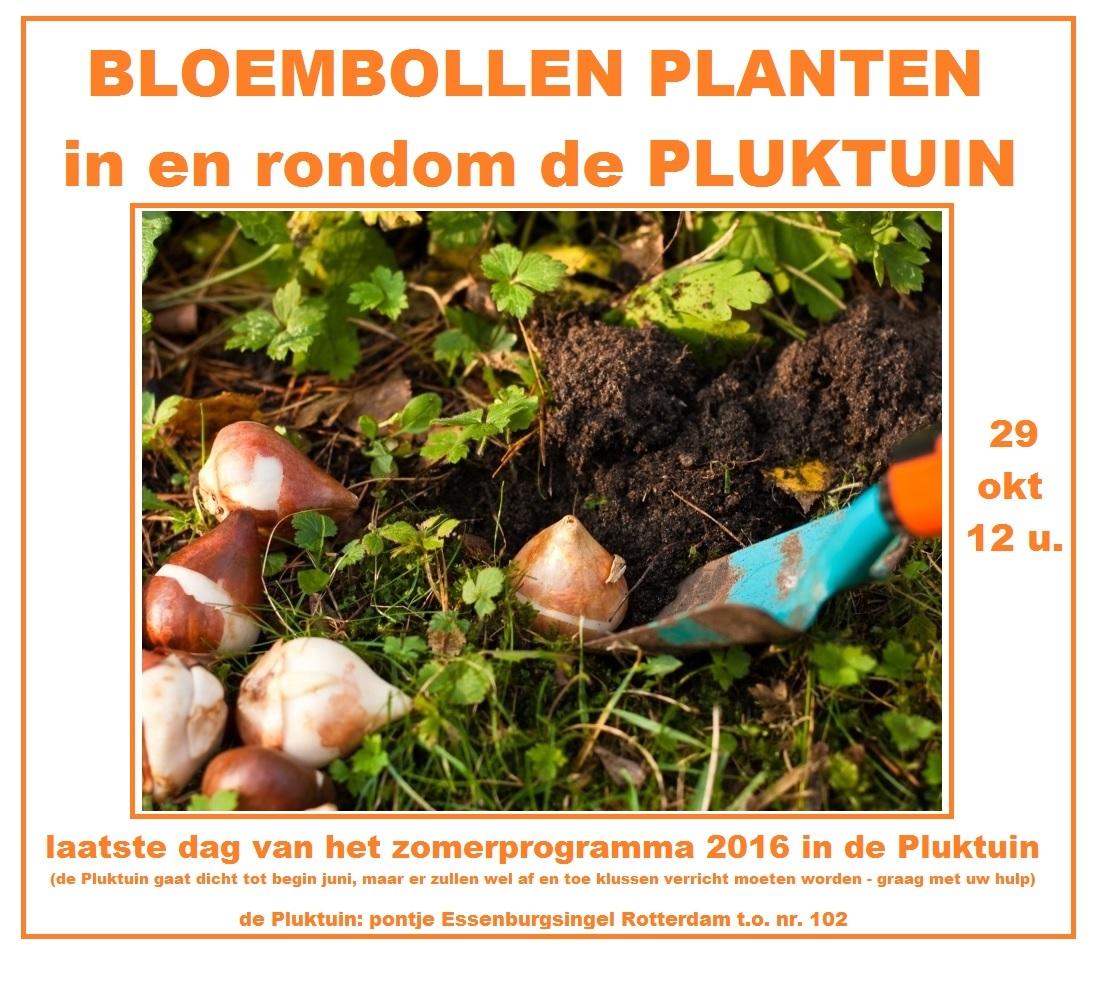 bollen-planten-29-okt-2016-laatste-dag