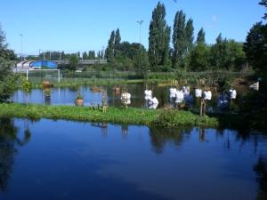 depluktuin wateroverlast 14 juli 2011 010